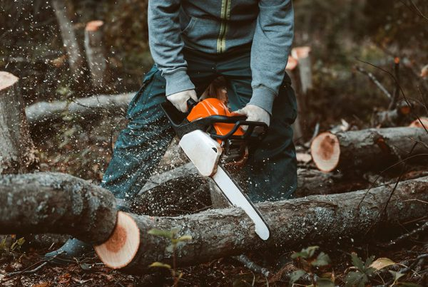 Forestry First Aid Training in Sussex