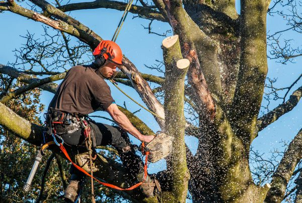 Sussex Forestry First Aid Training